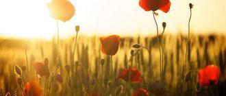 10 вещей, которые люди в своей жизни любят делать по другому