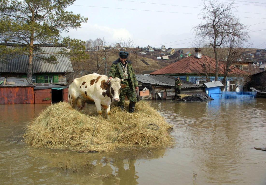Спасатель спасает корову, которая оказалась ловушке в затопленном селе Смирновка Сибирского региона (Россия), 17 апреля 2004 года.