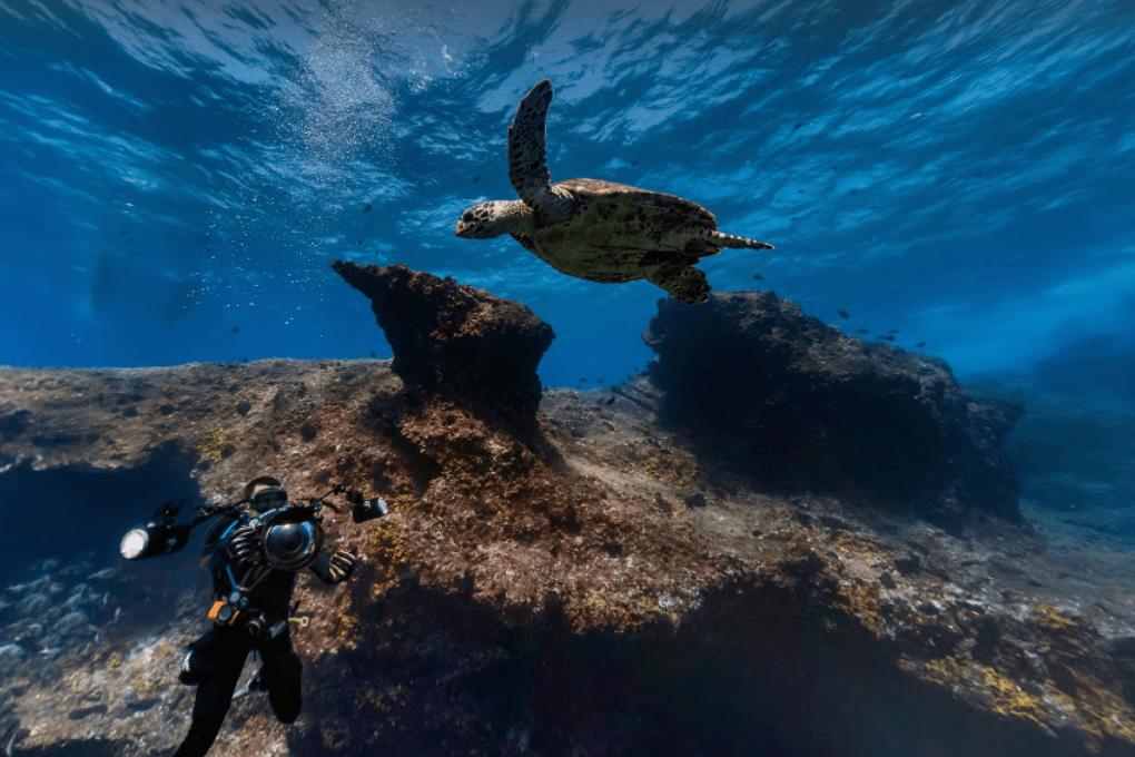 Google Street View открыл подводный мир бразильских островов