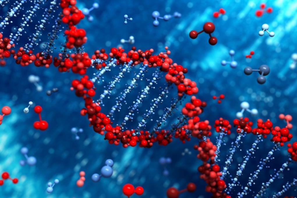 Китайцы впервые отредактировали геном человека