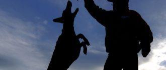 Собака стала лучшим другом человека благодаря гормонам