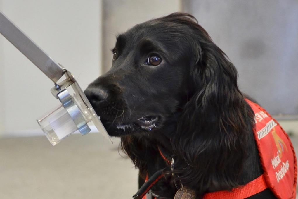 Собак научили определять рак простаты