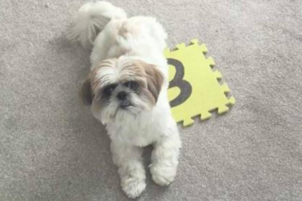 Самый умный пес в мире знает математику