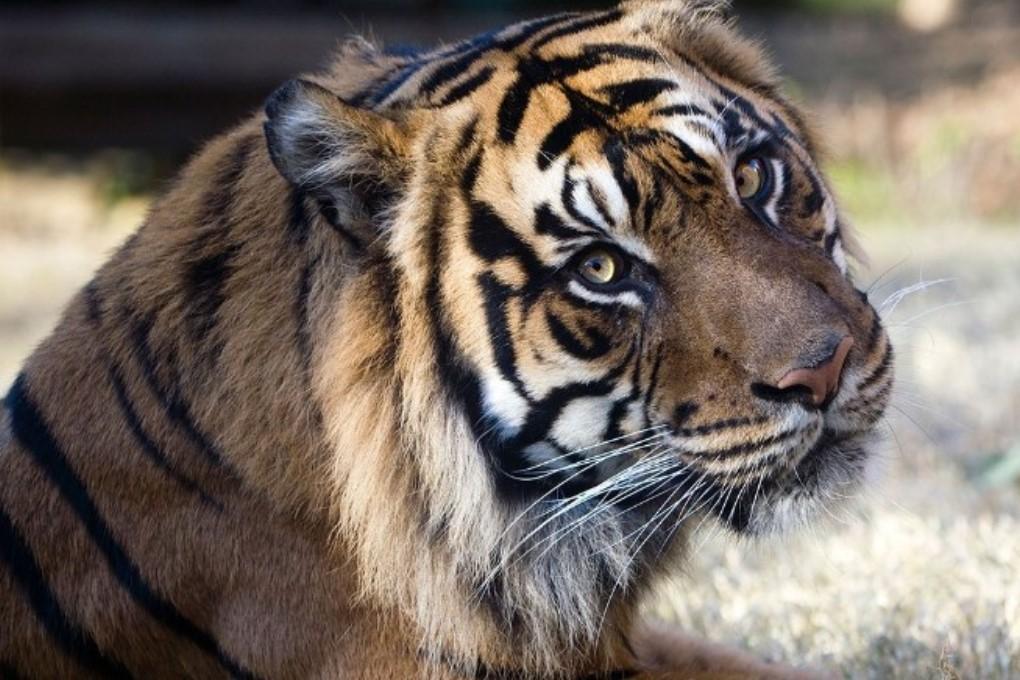 Ученые построят «замороженный зоопарк»