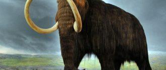Американский фермер нашел останки шерстистого мамонта