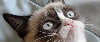 Учёные: видео с кошками делает нас счастливыми