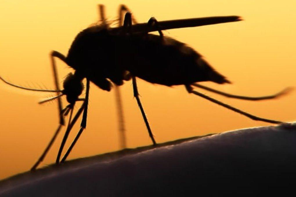 В Европе одобрили первую вакцину против малярии