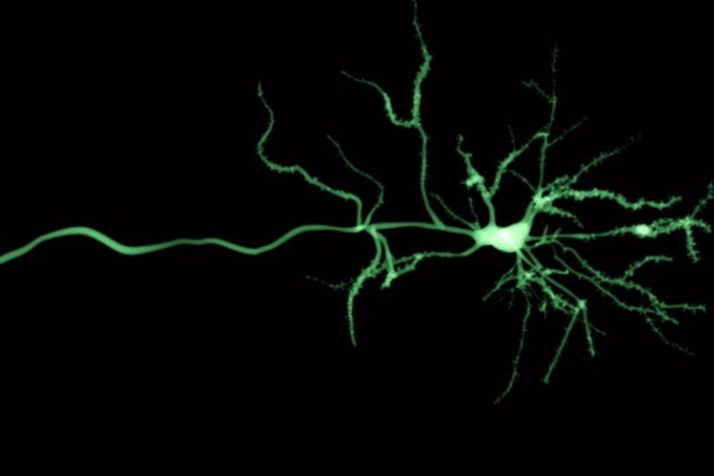 Ученые создали искусственные клетки головного мозга