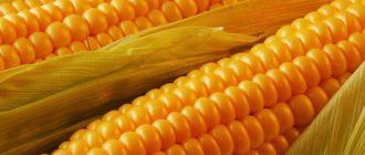 Китаец признался в заговоре целью которого была кража семян американской кукурузы